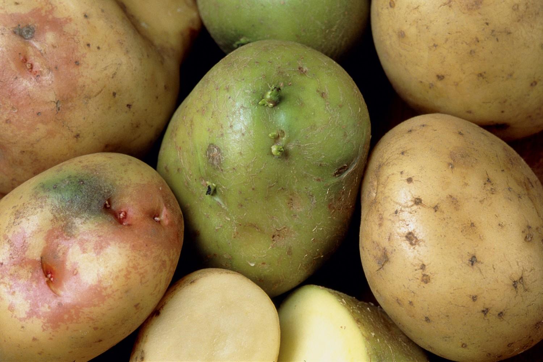 Возможный вред от употребления картофеля
